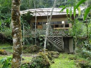 Linda Moskalyk-Studio Costa Rica