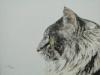 Linda Moskalyk - Brady Cat